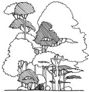 Diagram of a healthy grouping of trees of various heights